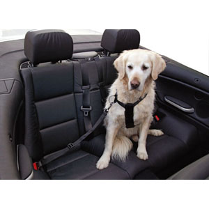 Sicherheitsgurt für Hunde