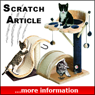 Scratch Articles