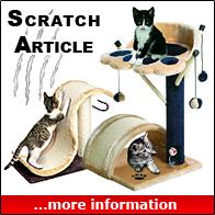 Scratch Articles